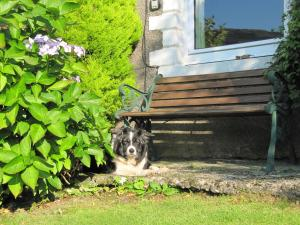 Pet or pets staying with guests at Blaes Crag Cottage