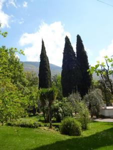 A garden outside Casa Querceto