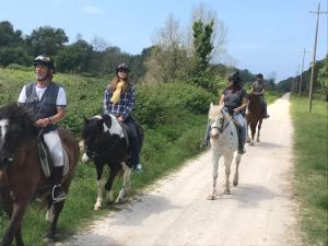 Horseback riding at the apartment or nearby