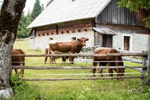 Živali poleg počitniške hiše oz. v okolici