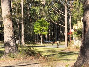 A garden outside Bay and Bush Cottages Jervis Bay
