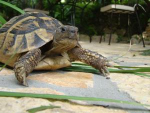 Turtle Apartments