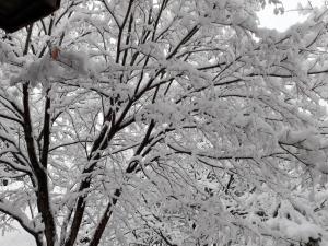 Mayfare Narsha Pyeongchang during the winter