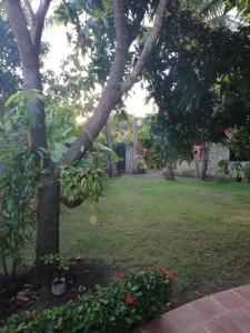 A garden outside Rooms10dollar