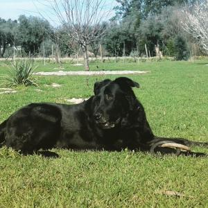 Pet or pets staying with guests at Casa de Coco