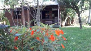 En trädgård utanför Solar Vovó Emma House