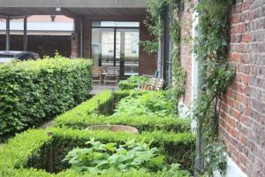 A garden outside Miniloft Abel Abri