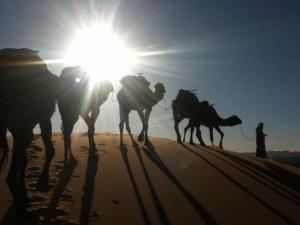 Camel Trekking Sahara Tour