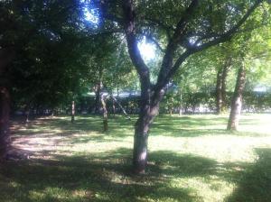 Jardin de l'établissement House Oliver