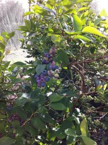 Blueberry B&B