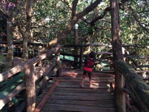 Tree Top Eco-Lodge