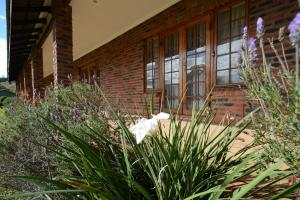 Chillifields Guesthouse