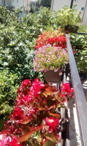 Filip Apartments Ohrid
