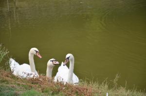 Animal ou animaux domestique(s) séjournant avec des clients dans l'établissement Le Domaine des Fagnes