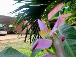 Havai Guesthouse