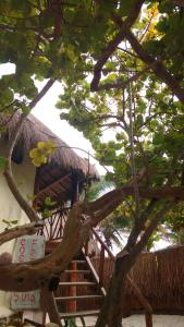 Cabañas Selva Tulum