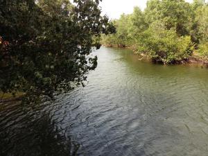 Mangroves & More @ Cambodia