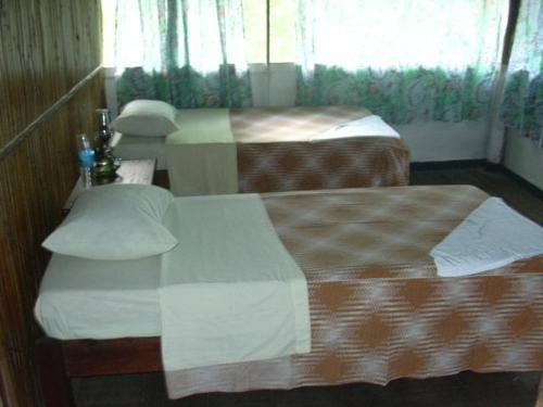 Amazon Lodge & Safaris