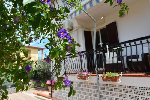 Villa Elisabetta Apartments