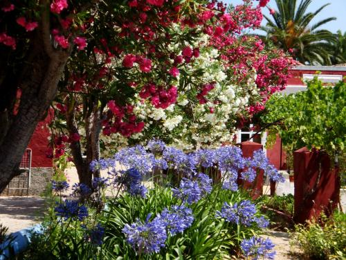 A garden outside Quinta dos Reis