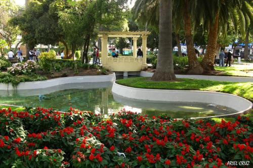 A garden outside Departamento en Viña del Mar Céntrico