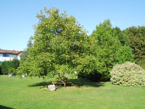 Κήπος έξω από το Ferienhaus Henriettenhof