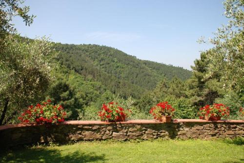 A garden outside Lucca Villa Sleeps 6 Pool Air Con WiFi