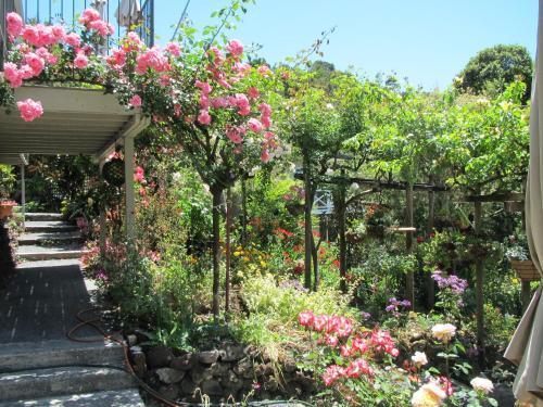 A garden outside Craicor Boutique Apartments