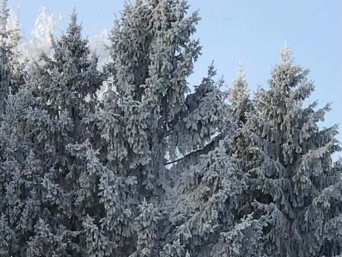 Homely зимой