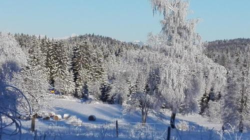 Apartmaji Bizjak during the winter