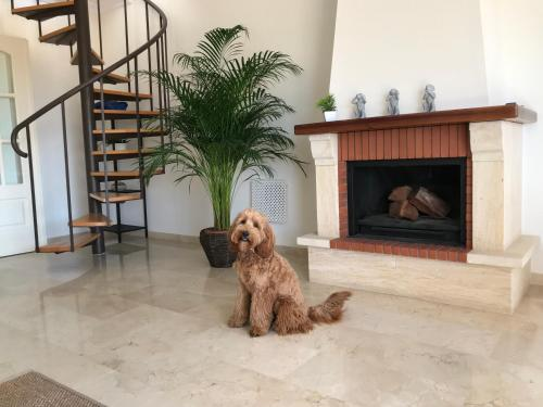 Pet or pets staying with guests at El Faro - Amazing Duplex with Sea View , 3 Min Walks to the Beach
