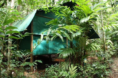 Daintree Crocodylus Village