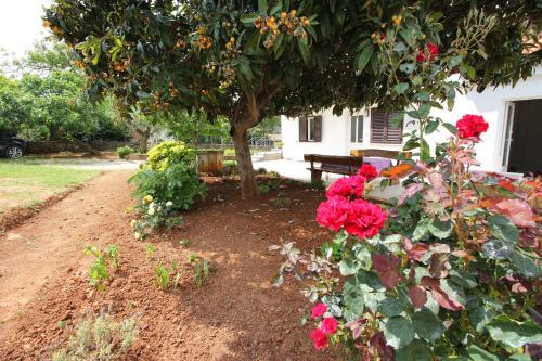 A garden outside Casa Lidija