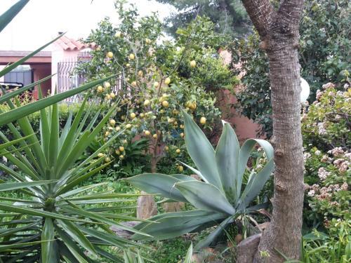A garden outside Residenza Bea