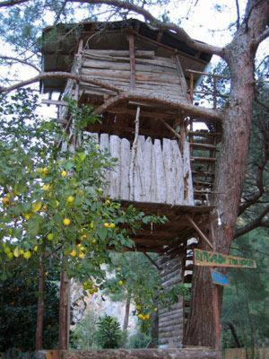 tree houses. Modren Tree Intended Tree Houses T
