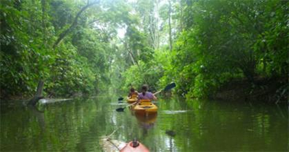 Pachamama Jungle River Lodge - Punta Uva