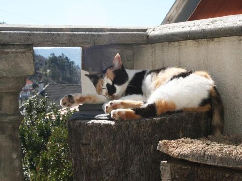 Pet or pets staying with guests at Casa da Risca