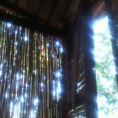Olympia Treehouse
