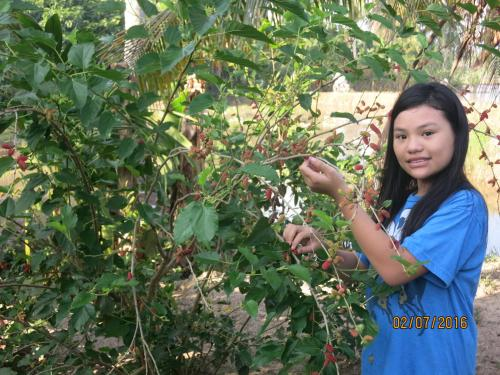 S jours chez l 39 habitant dans cette r gion for Jardin du mekong homestay