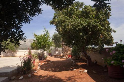 A garden outside Villa Xenia