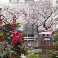 Jinhae Garden House
