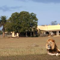 Hotels in Addo Elephant