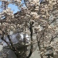 Casa della Magnolia