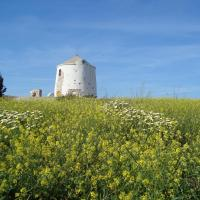 Paros Traditional Windmill
