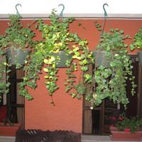 Casa San Bartolome