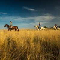 Ranch Terra