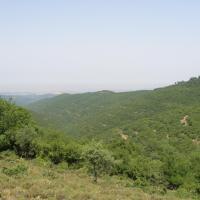 Peaceful Woodlands
