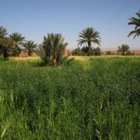 Sahara Source Vie