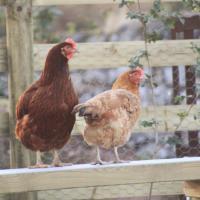 the hay barn @ hay-on-wye