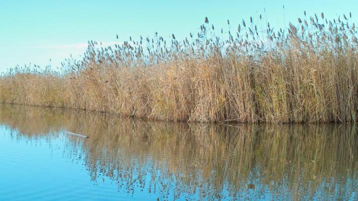 Encuentra el mejor lugar para los lagos en Illmitz
